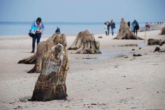 Rowy - prehistoryczny las sprzed 3 tysięcy lat